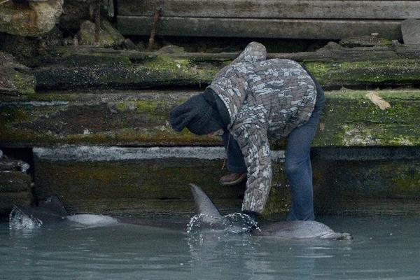 <p><strong>El delfín nada en aguas residuales de Nueva York. (EFE).</strong></p>