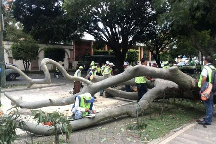 El árbol no causó daños físicos ni materiales. (Foto Prensa Libre Érick Ávila)