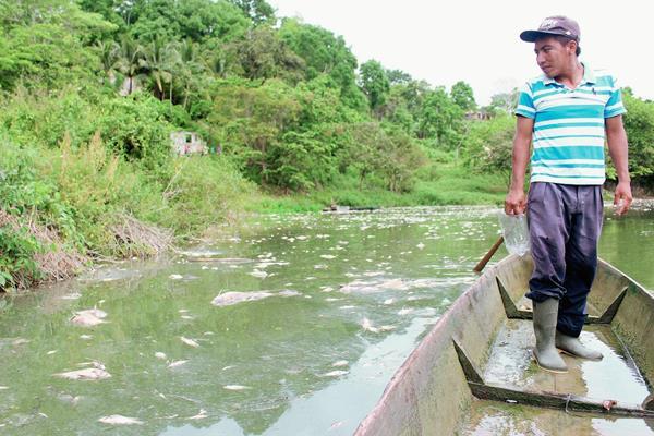 Pobladores han pedido que se investigue qué originó el desastre en el río La Pasión, Petén.