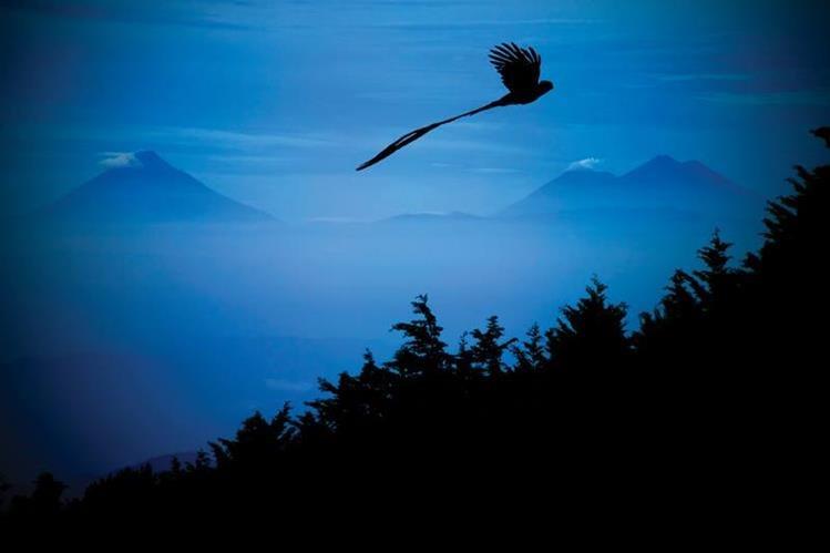 Imagen de un quetzal captada en la Siera de las Minas. (Foto Prensa Libre: Ricky López Bruni)