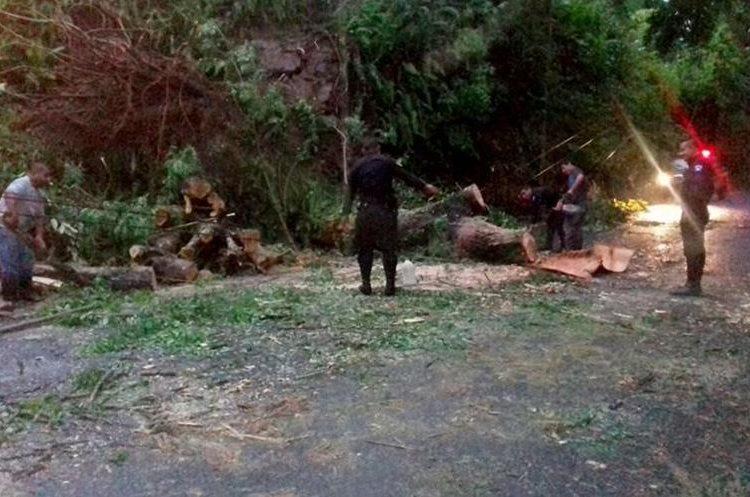 Las autoridades de Izabal también reportan la caída de varios árboles. (Foto Prensa Libre: Dony Stewart)