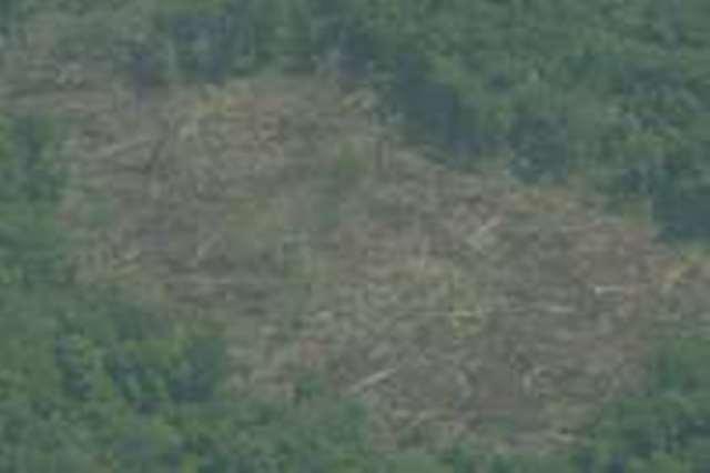 Las invasiones de tierras causan destrozos como deforestación y empobrecimiento del suelo. (Foto: Hemeroteca PL)