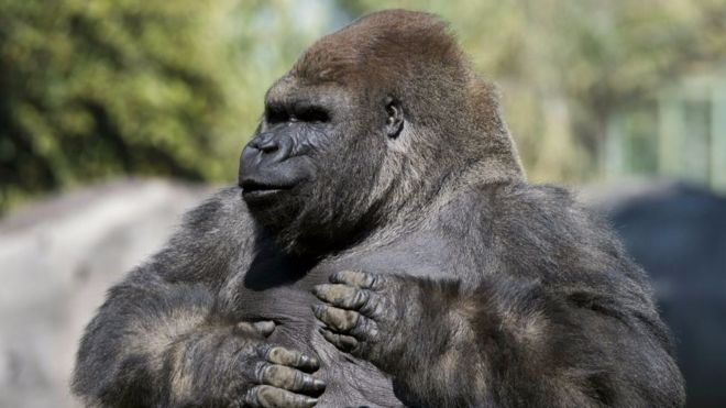 Bantú era muy querido en México. AFP