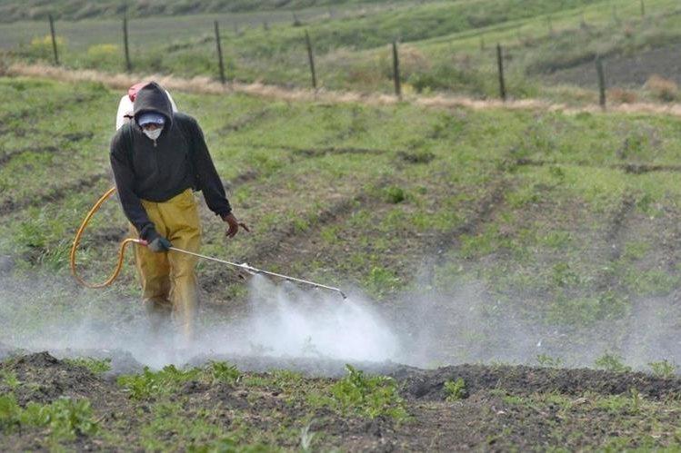 Cantidades toleradas de pesticidas en la producción de alimentos son un riesgo para la salud.