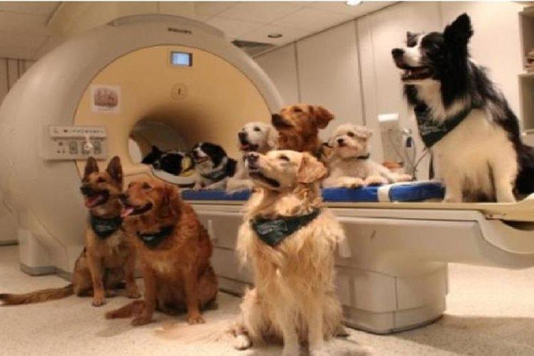 Los perros entrenados fueron colocados alrededor de un escáner de resonancia magnética. (AP).