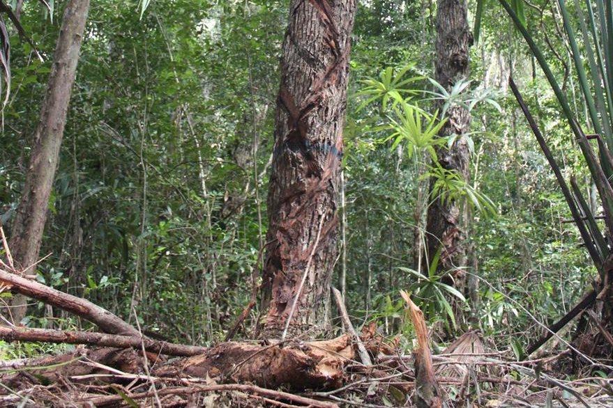 Parque Nacional Laguna del Tigre, donde permanecen retenidas las personas. (Foto Prensa Libre: Hemeroteca PL).