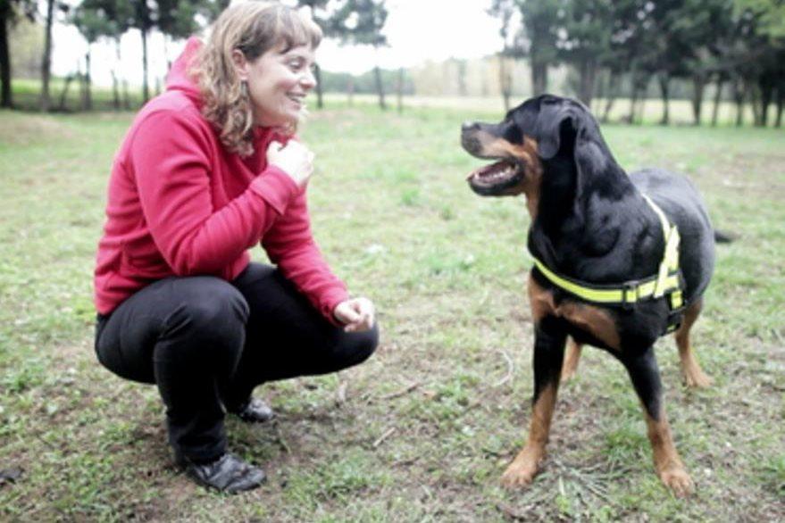 El perro no responde con palabras pero presta atención. (Foto Prensa Libre: Hemeroteca PL)