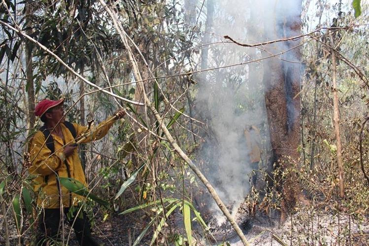 En Petén se ha declarado alerta amarilla. Bomberos forestales efectúan la extracción de plantas secas como medida para prevenir los incendios. (Foto Prensa Libre: Rigoberto Escobar)