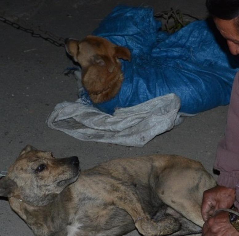 Perros callejeros son liberados por vecinos de Xela. (Foto Prensa Libre: María José Longo)