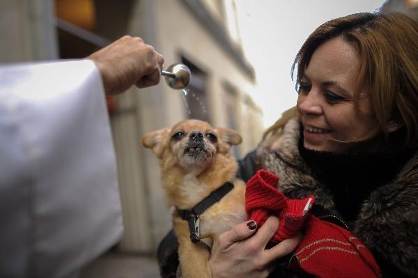 """<p>Un cachorro es bendecido por un sacerdote en la iglesia San Antón en Madrid. (Foto Prensa Libre: AFP)<br _mce_bogus=""""1""""></p>"""
