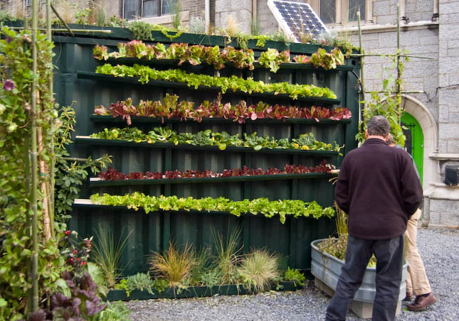 Las personas buscan formas de acomodar los cultivos en los espacios de edificios y casas particulares. (Foto Prensa Libre: Google)