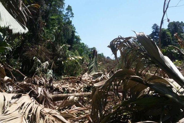 Una de las áreas afectadas por la tala en Punta de Manabique, Izabal. (Foto Prensa Libre: Dony Stewart).