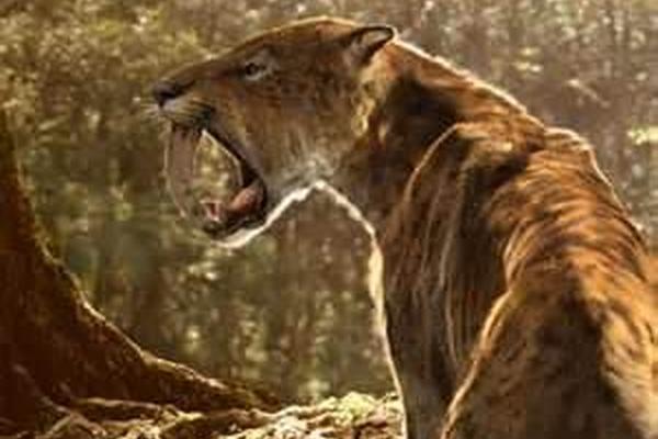 <p>El tigre diente de sable no se extinguió por hambre</p>