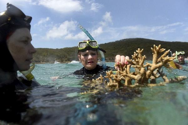 La científica Alison Jones (i) muestra un coral a Pauline Hanson (d) y Malcolm Roberts (c).