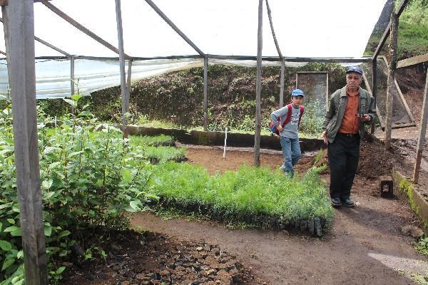 Vivero  donde fueron cultivados los pilones que serán trasplantados a sitios deforestados.