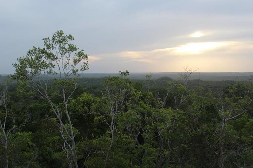 Atardecer en El Mirador, desde la plataforma de La Danta, donde a lo lejos se observan los templos El Tigre y Los Monos. (Foto Prensa Libre: Rigoberto Escobar)