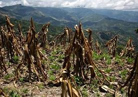 Dentro de los desastres provocados por el niño están las severas sequías. (Foto: cambioclimático.com)