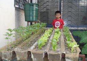 Cultivos hidropónicos se cultivan en el país
