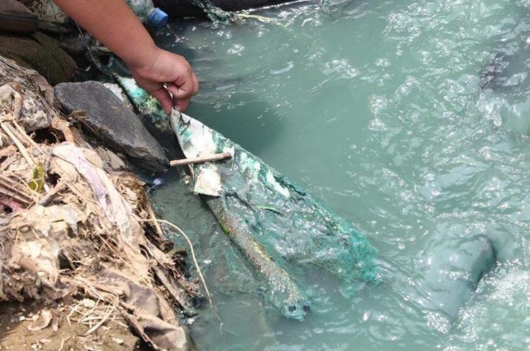Grandes cantidades de basura llegan cada día  al cauce del río Platanitos, en Villa Nueva.  (Foto Prensa Libre: Érick Ávila)