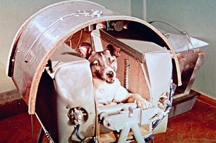 La perra Laika aparece en la cápsula del Satélite ruso Sputnik II, lanzado el 3 de noviembre de 1957. (Foto: AP)
