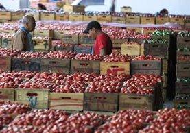 El aumento de precio del tomate —un producto elemental de la canasta básica— disparó a 5.22% la inflación, según el INE. (Foto Prensa Libre: Hemeroteca)