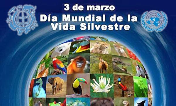 El Día Mundial de la Vida Silvestre es para recordar que aún falta mucho por hacer por la protección de la flora y fauna del mundo.