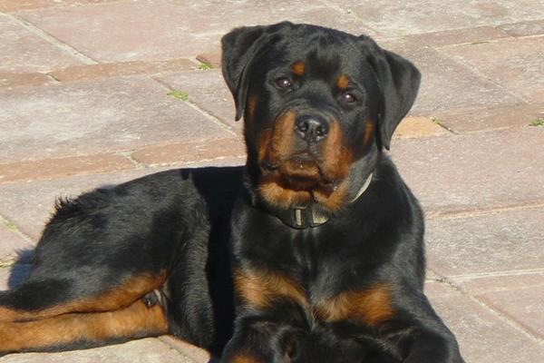 <p>El detenido agredió al dueño del perro luego de ser sorprendido. (Foto: Internet)</p>