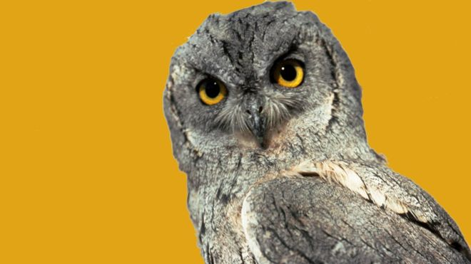 ¿Es la sabiduría un rasgo con el que se nace? (JOHN FOXX)