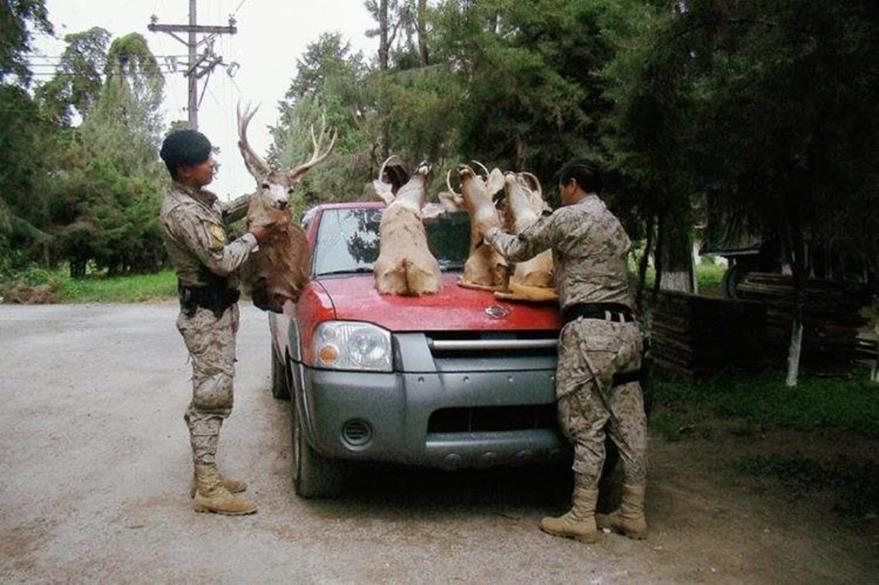 Decomiso efectuado en julio 2015 en El Tejar, Chimaltenango. (Foto Prensa Libre: Hemeroteca PL).