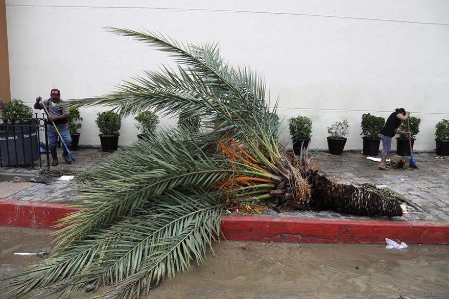 Árboles derribados deja el paso del huracán Newton por zona turística de México. (Foto Prensa Libre: AP).