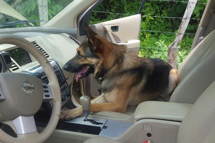El agente canino murió en cumplimiento del deber. (Foto Prensa Libre: PNC)