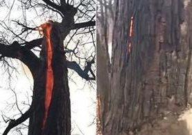 Un árbol emana fuego del interior de su tronco. (Foto Prensa Libre: YouTube)