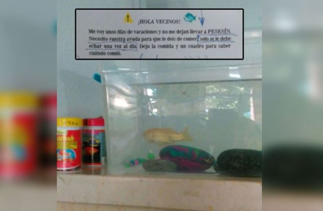 Varios vecinos siguieron las instrucciones de la propietaria de Pesesín, para sus cuidados. (Foto Prensa Libre: Twitter / Tremending)