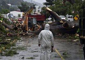 Trabajadores retiran el árbol que cayó por la fuerte lluvia y mató a un niño en Ciudad de Panamá. (Foto Prensa Libre: AFP).