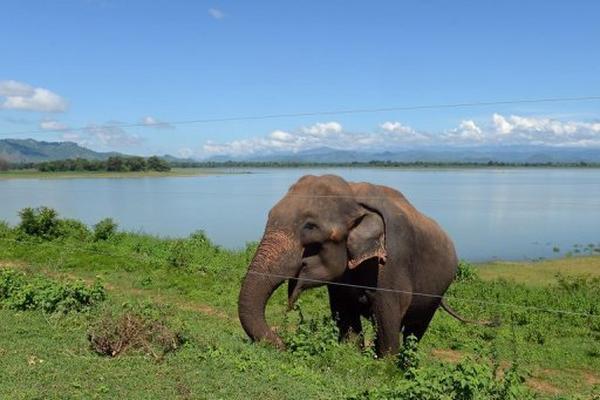 <p>autoridades nepalíes están buscando a un elefante. (AFP).<br></p>