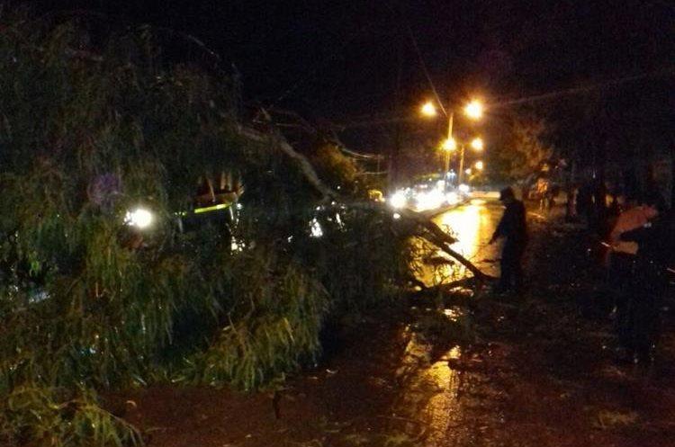 Árbol derribado en una carretera de Petén. Foto Prensa Libre: Conred.