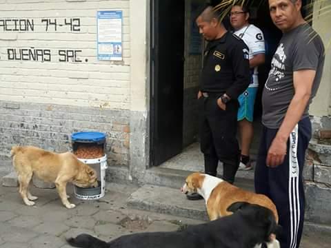 En San Miguel Dueñas, Sacatepéquez, también se apoya en los comedores para perros. (Foto Prensa Libre: Julio Hernández)