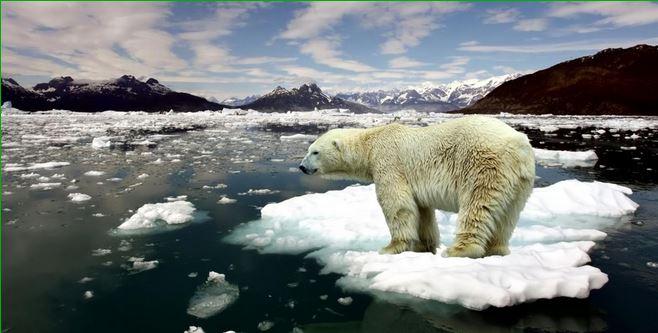 Algunas especies como los osos polares se ven afectados por el continuo derretimiento de los polos. (Foto: escuelapedia.com).
