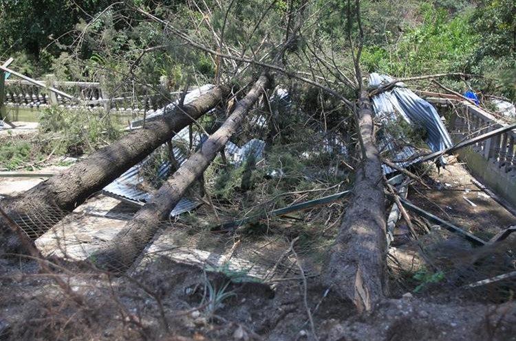 Durante el invierno, decenas de árboles caen sobre viviendas en todo el  país,  lo que genera pérdidas millonarias. (Foto Prensa Libre: Esbin García)