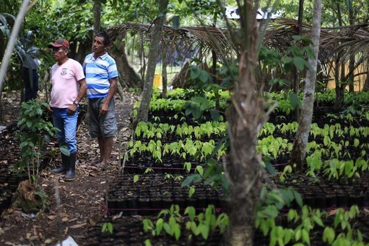 Pobladores de San Marcos, Poptún, Petén, se capacitan sobre siembras de cultivos con la organización Balam. (Foto Prensa Libre: Edwin Bercian)