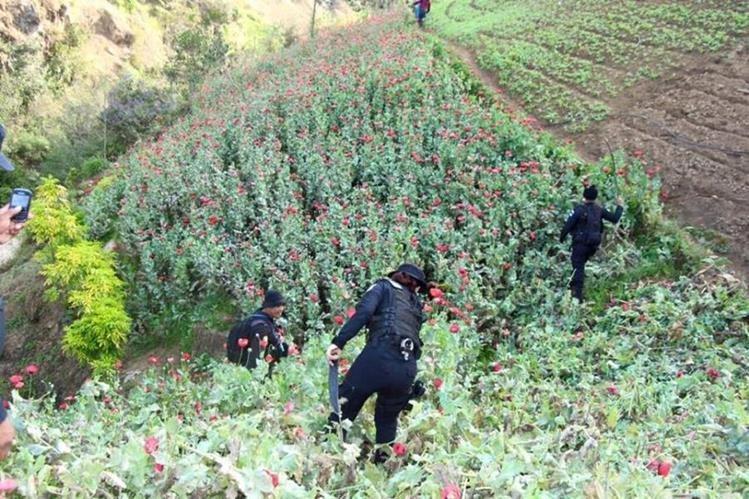 Agentes de la PNC participan en operativo antinarcótico en San Marcos. (Foto Prensa Libre: Ministerio de Gobernación).