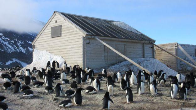 La cabina está ahora en medio de una colonia de pingüinos. NZ-AHT