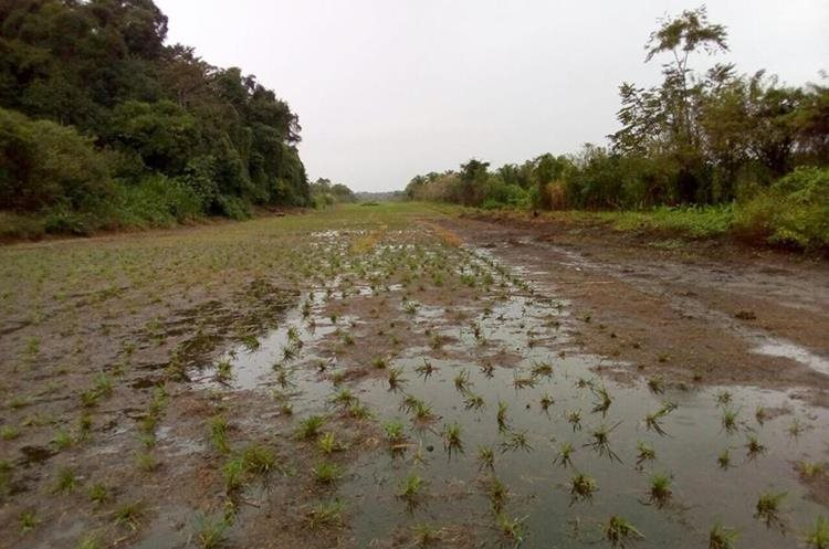 Una pista clandestina fue localizada en El Corozo, Lívingston, Izabal. (Foto Prensa Libre: Cortesía)