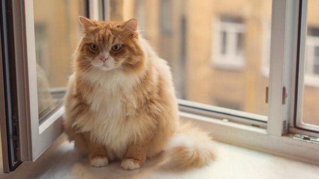 Son por naturaleza cazadores, pero hoy en día la mayoría de los gatos vive en departamentos pequeños sin espacio para hacer ejercicio. (Foto, Getty Images)
