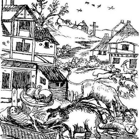 """Los cerdos eran los acusados más comunes. Andaban sueltos y cometían """"delitos"""". ILUSTRACIÓN DEL LIBRO DE EP EVANS"""