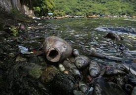 Vecinos reportan desde el viernes varios peces muertos en las orillas del lago.