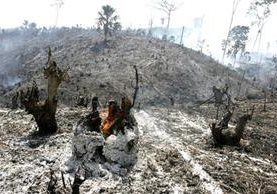 Se calculan 10 días para controlar 21 incendios en el departamento del Petén. (Foto Prensa Libre: Hemeroteca PL)