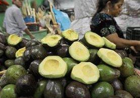 El aguacate no ha tenido un buen año, no solo por su producción, sino también por el alza de precios. (Foto Prensa Libre: Hemeroteca)