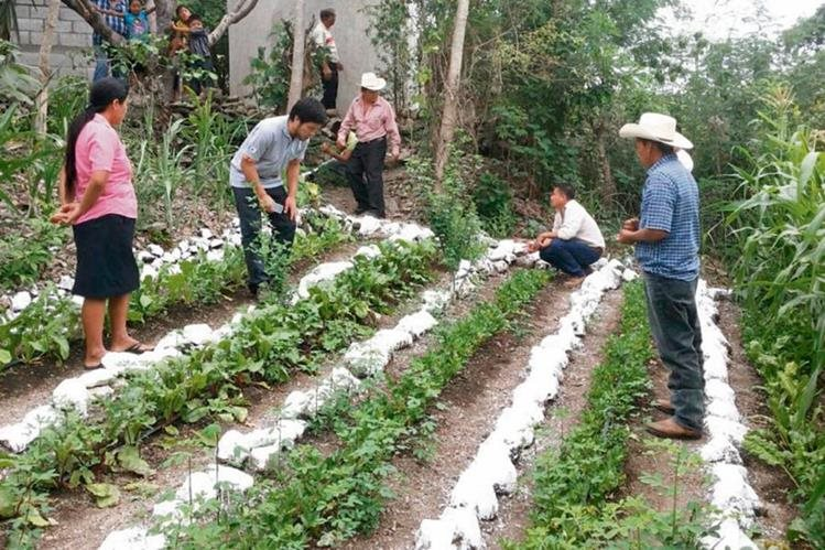 captación y manejo de agua de lluvia podría servir para abastecer del líquido por varios meses a los cultivos del Corredor Seco, dicen expertos.