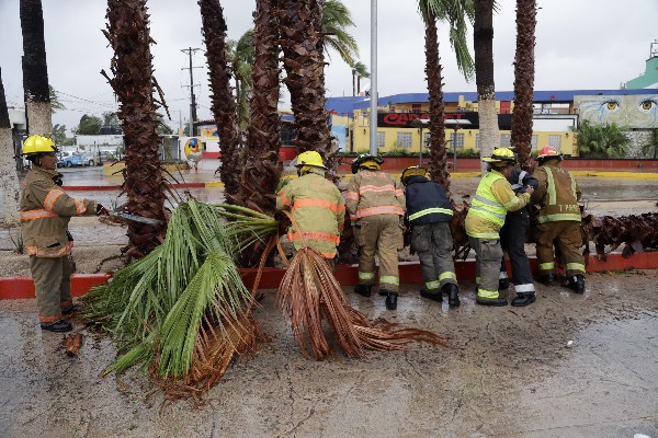 Bomberos retiran una palmera derribada por el huracán Newton en Cabo San Lucas, México. (AP).